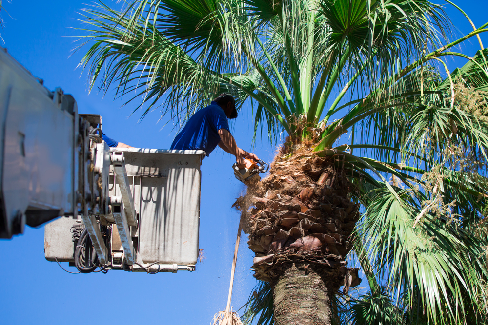 Tree Trimming Pasadena